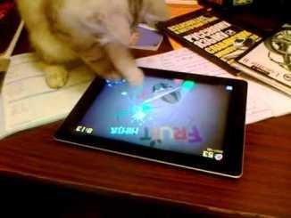 Gato jugando con el iPad