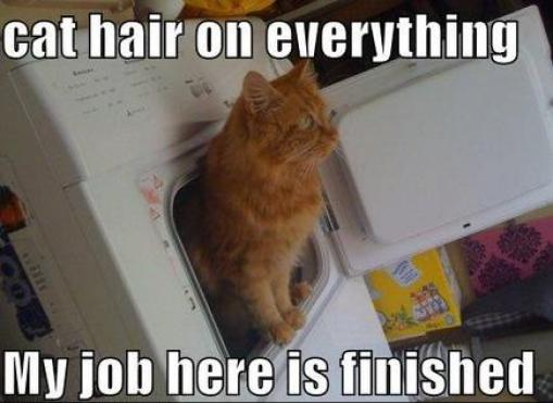 cat-humor-bengal-cat-jokeselement54