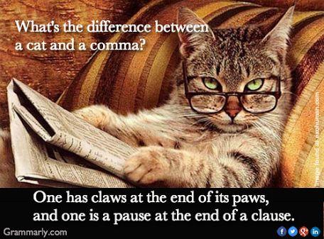 cat-humor-6