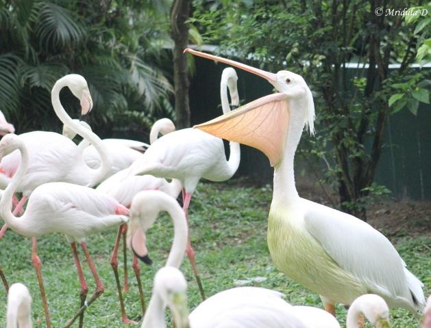 KL Bird Park in Kuala Lumpur
