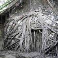 tree house, tainan, taiwan