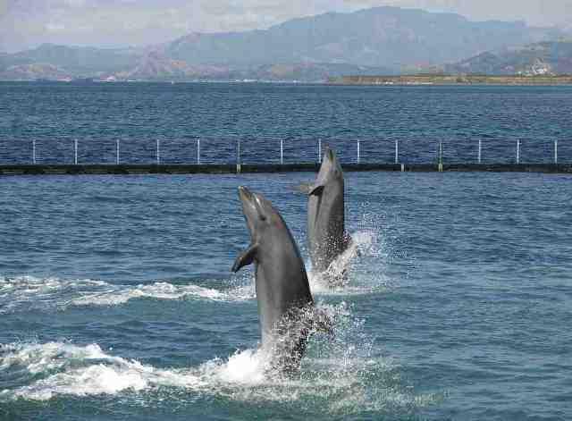 dophins, ocean park, subic, philippines