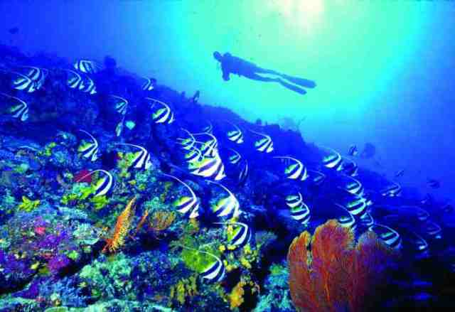 diving, fiji, recreational activity