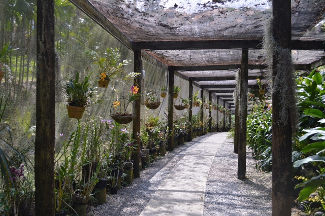 orchid garden, fiji