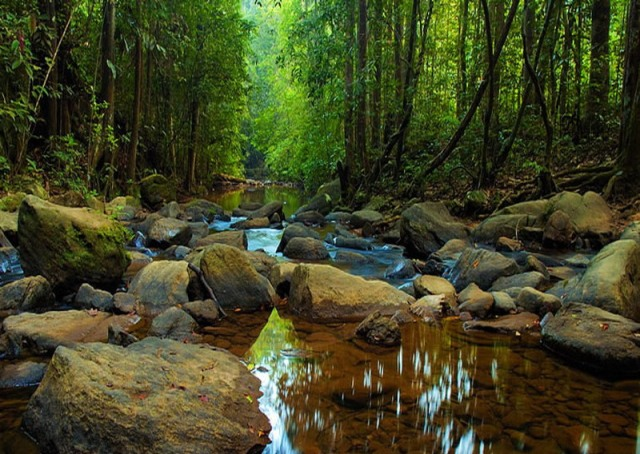 forest reserve, sinharaja, sri lanka