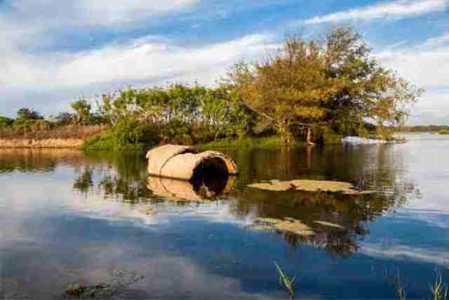 wet lands, chiayi, taiwan