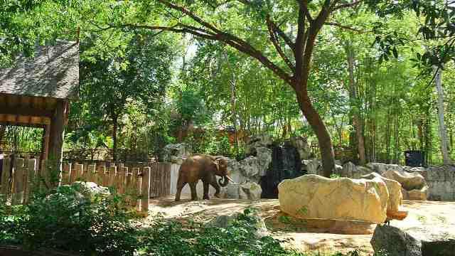 zoo, chiang mai, thailand