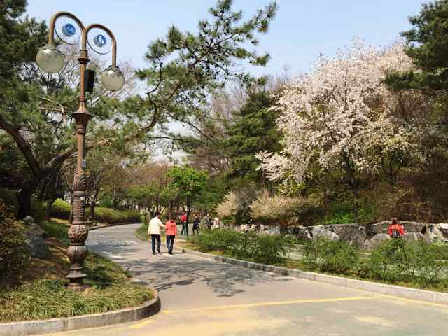 yeouido park, seoul, korea,