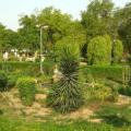 masooria hill, india, jodhpur, garden