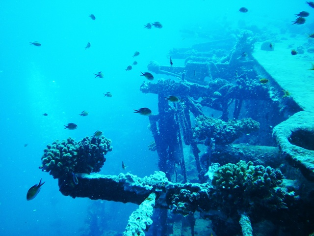 diving, saudi, jeddah