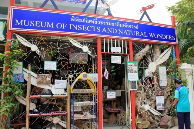 museum, insects, thailand, chiang mai