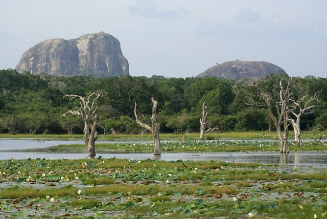 national park, sri lanka, yala park