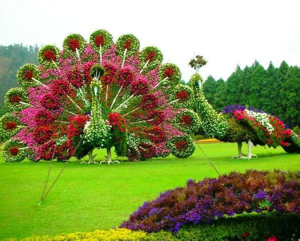peacock park, taiwan, nantou
