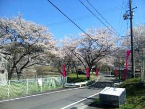 引用元:http://ume2013.blog.so-net.ne.jp/