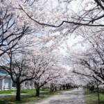 高知県 春に行く桜と滝と絵本の世界を訪ねる旅はこちらから