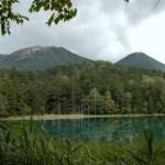 北海道 春の釧路湿原とシロクマのミルクを訪ねる日帰り旅