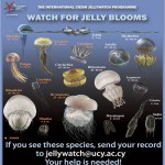 Jellywatch_ENG