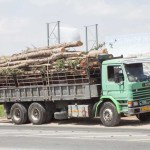 350 trees felled at Timi forest