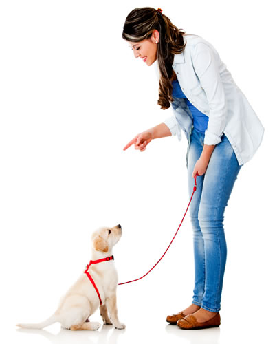Woman training her puppy