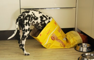 dog eating food out of dog food bag