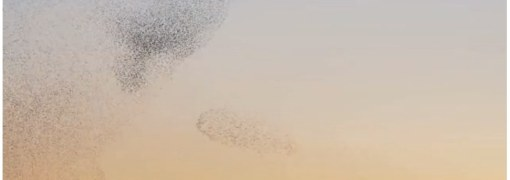 A bird ballet | Music Video on Vimeo