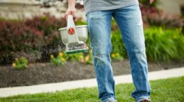 How To Grow Grass Anywhere With Scotts EZ Seed
