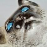 Glazed Terracotta Cat 12