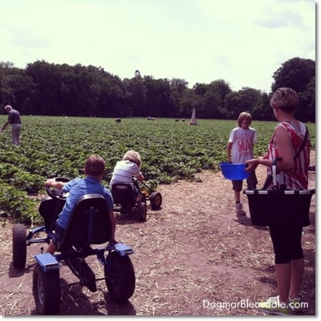 picking strawberries in Germany with kids