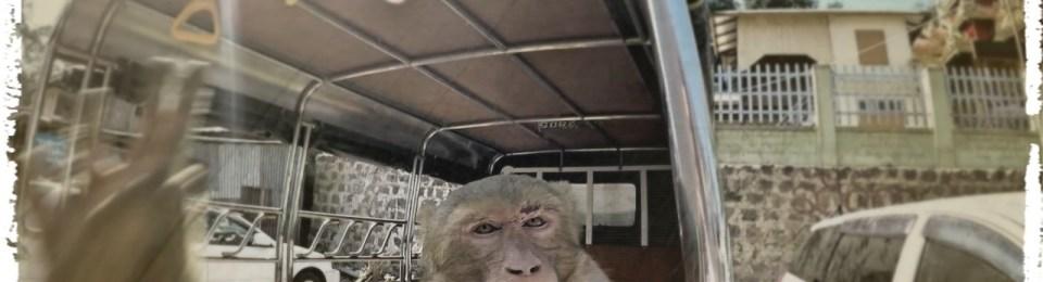 Myanmar-Mount Popa: Indiana Dags and the Monkeys' of Doom