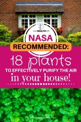 Резултат со слика за NASA-Recommended: 18 Plants To Effectively Purify The Air In Your House!