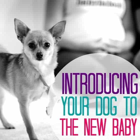 tips for new dog