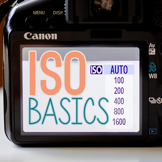 Getting to know your camera: ISO Basics