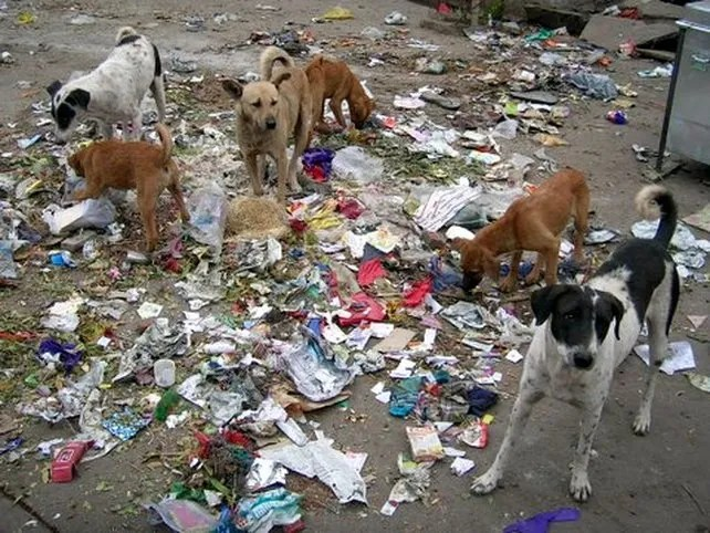 According to www.occupyforanimals.org, approximately 75% of dogs in the world are strays.