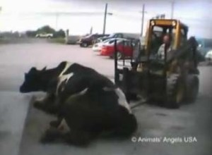 Animal abuse video and ag gag bills.
