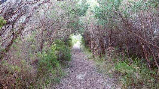 bush pathway