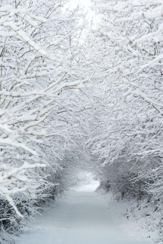 snow tree tunnel