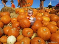 Abigail on the pumpkins from the direct angle.