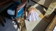 Abigail loves her animals!