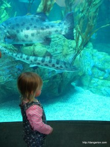 Abigail's first experience at the Aquarium of the Pacific in Long Beach, CA.