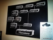 The family tree of the Marionberry
