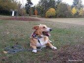 Rowlf the photogenic pup.