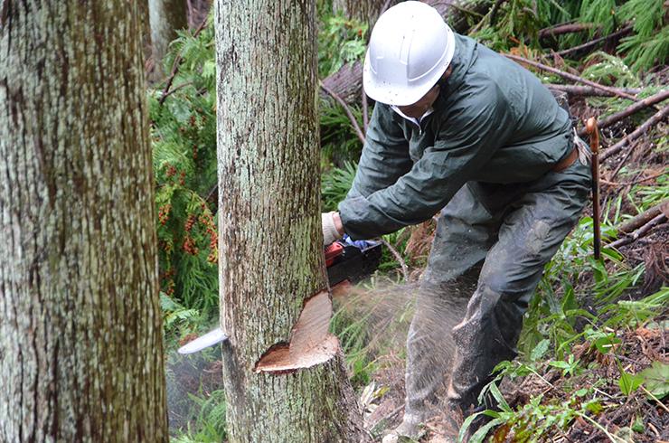 鎌倉の一時預かり保育たまっこルーム木を伐る人