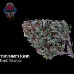 Travellers Kush