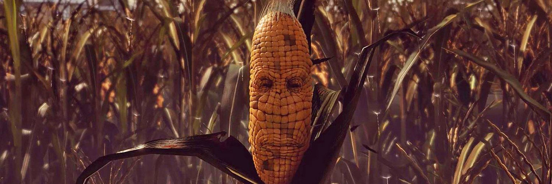 maize-feature