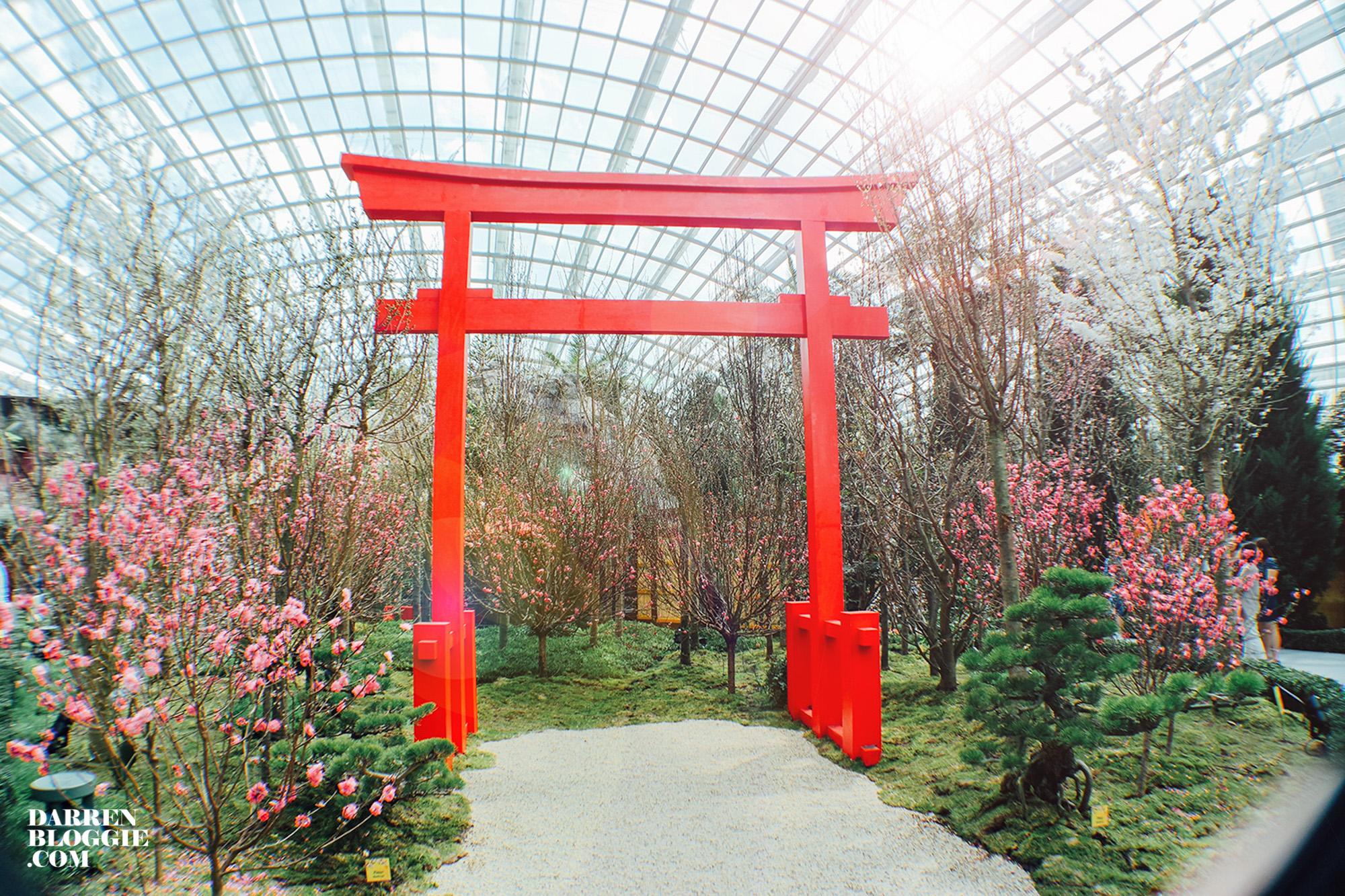 Blossom-beats-sakura-cherry-gardensbythebay-18