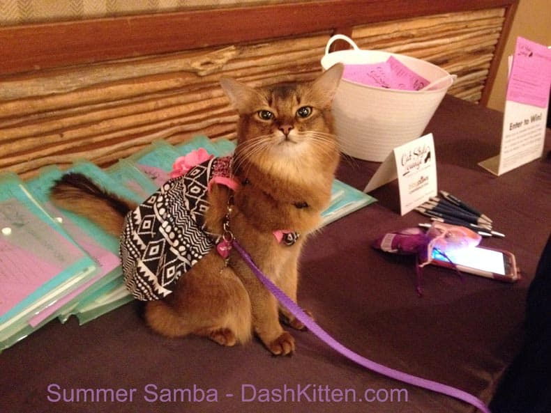 sweet cat, cute cat, summer from sparkle cat. somali kitten,