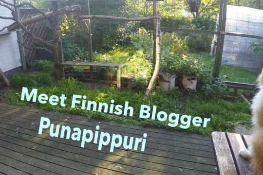 Punapippuri Finnish cat blogger