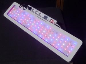 led_kweeklamp_200watt_bloei