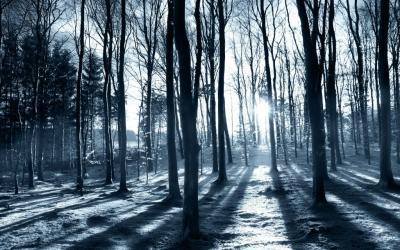 Sun shining through the trees HD desktop wallpaper : Widescreen : High Definition : Fullscreen