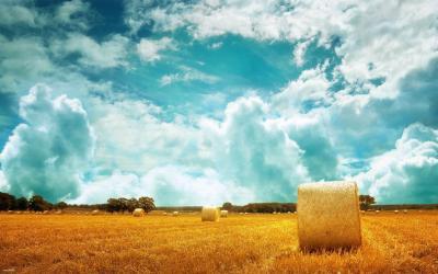 Hay bales on the golden field HD desktop wallpaper : Widescreen : High Definition : Fullscreen